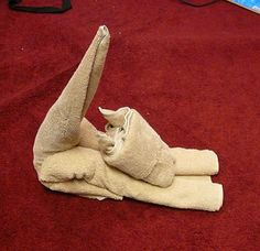 How to Fold a Towel Cat