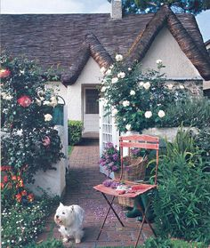 roof, puppies, california, cottages, hous, dog, place, garden, cottage style