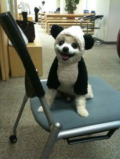 Cachorro-Panda