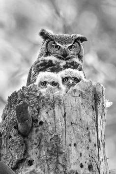 Owl Family~♛
