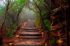 Forest Path, South Wales, Australia