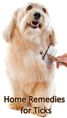 Home Remedies For Whitening Dog Fur