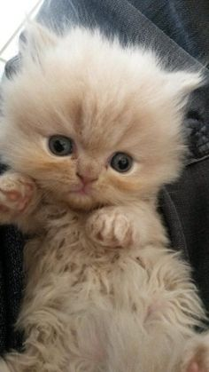 Oh my! Time for an extremely cute kitten!