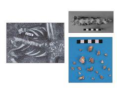 Medieval Italian Skeleton's Surprising Diagnosis: Livestock Disease