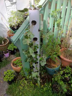 DIY : Vertical Strawberry Tube Planter