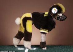 Hah...I like poodles and he likes Steelers!