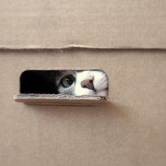 Peekaboo  (via Unitedcats)