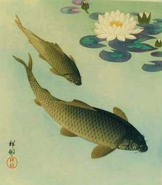 Japan koi and other ornamental fish on pinterest koi for Japanese ornamental fish