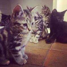 Tabby kitten cat photographi, dinah cat, cat emporium, kitti, tabbi kitten, quirki anim