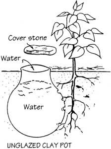 Buried Clay Pot Irrigation: bury unglazed earthenware or clay pots next to plants or small trees. The pots are filled w/ water & covered w/ a lid. Since the unglazed walls of the pods are porous, the water can seep slowly out & reach the roots of the plants.