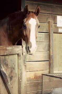 A Horse Looking Out From His Stall.
