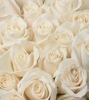 Bulk Roses.  Starting at $131.95Description:   A 50-60 cm. multi-petaled blossom that ranges in size. Comes as a single flower atop a thorny stem from 12-40 inches high. Stem size and blossom count varies, depending on the variety. wholesal flower, flower 8779232769, white roses, bulk flower, bright white, stems, flowers, blossoms, beauti rose