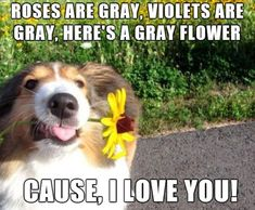 A poem by Dog.