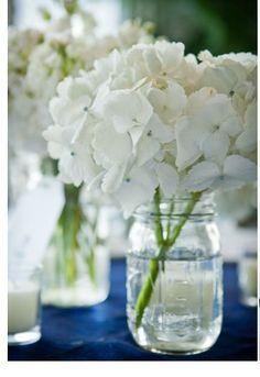 white hydrangeas: all year  $$
