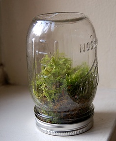 "Mason Jar Terrarium by disdressed.blogspot.com: ""For those of you who use Pinterest, you know the only thing cooler than making a terrarium could be a terrarium inside a Mason jar.""- Ben Silbermann http://allthingsd.com/20120814/pinterest-nudges-users-off-the-couch-and-into-the-world-with-new-android-and-ipad-apps/  #Terrarium #Mason_Jar #Liesell_Gbson"