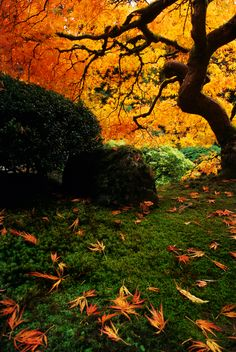Autumn in Portland Japanese Garden, Oregon