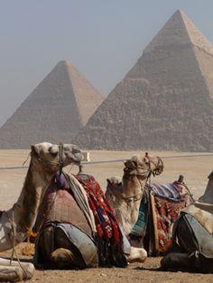 Hurghada camel