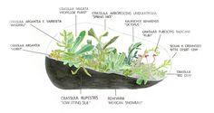 Terrarium illustration - of plants  http://www.botanyfactory.com/