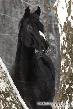 Black horse with unusual marking. Love the uniqueness!