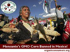 Mexico Judge Bans Monsanto's GMO Corn!