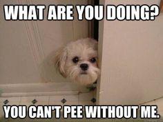 . the doors, anim, cat, dogs, funni, pet, true stori, puppi, bathroom