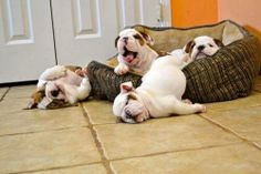 when you try to get out of bed but just can't ...