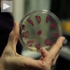 Cool Hunting Video Presents: Genspace - Brooklyn's community biotech lab, a place for experimentation and learning