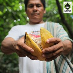 Did you know this is how your #chocolate starts out? This #ValentinesDay, remember you have the power to choose chocolate that improves the lives of cocoa farmers around the world. #FairTrade