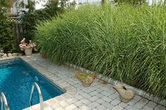 Living Privacy Wall  Fences and other privacy structures work just fine, but nothing beats a wall of friendly greenery for screening views from nearby neighbors. Fast-growing grasses, such as silver grass (Miscanthus sinensis), form dense clumps and grow more than 7 feet tall. Its tropical appearance is great near swimming pools.