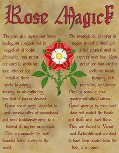 Rose magick