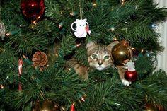 Cat-in-tree