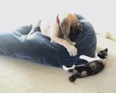 A dog and cat's magical moments together throughout the years (VIDEO) » DogHeirs | Where Dogs Are Family « Keywords: Great Dane, cat, friendship