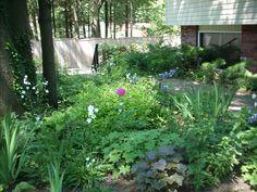 shady garden.