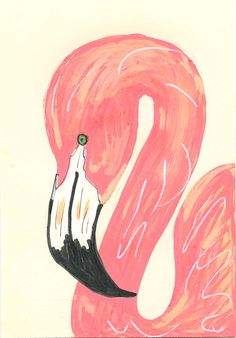 Coral flamingo illus