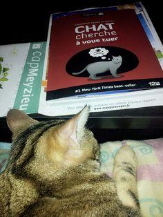 Tuer des chats