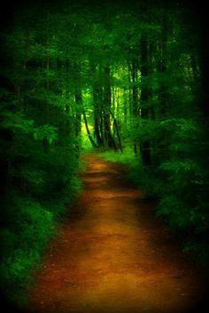 Deep Green of Summer, Ocono, South Carolina