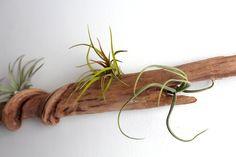Driftwood wall garden via Craftzine