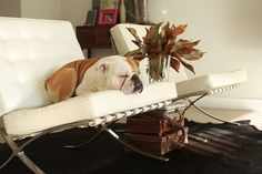 leaf arrangement, staked suit cases and the dog is pretty sweet.
