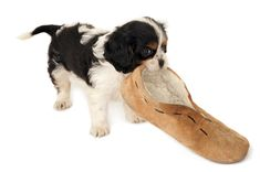 mouthing off! behaviorist nicole larocco talks about training mouthiness out of pets
