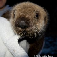 FedEx Special Delivery Helps Orphaned Sea Otter Pup Find New Home at Pittsburgh Zoo & PPG Aquarium
