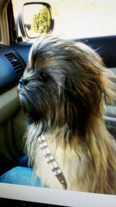 Best dog costume ever...HILARIOUS!