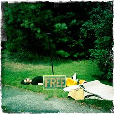 FREE: One Neil Gaiman (Good Condition.) free neil, funni, neil gaiman