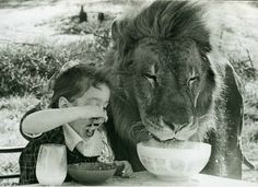 just eating cereal with my lion..