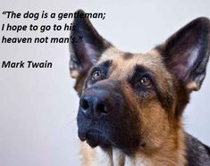 Mark Twain animal quotes and a cute dog #animals