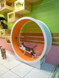 Cat Wheel ☀opawz.com   supply pet hair dye,pet hair chalk,pet perfume,pet shampoo,spa....