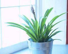 Houseplants: Growing Tips