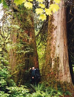 "National and regional conservation organizations have called on President Barack Obama to conserve the mature and old-growth forests in the Pacific Northwest. In a letter sent this month, American Bird Conservancy, Sierra Club, Natural Resources Defense Council, Cornell Lab of Ornithology and over 50 other organizations sought to remind the President that ""These magnificent forests provide clean drinking water for millions of Americans..."""