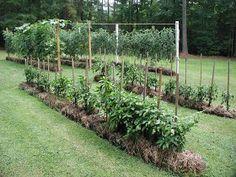 The Via Colony: Straw Bale Gardening: 101