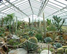 Cactus y suculentas de diferentes tipos