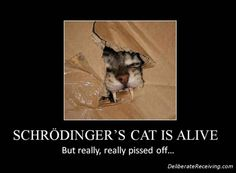 """Hysterical picture! Also an interesting blog post. """"What A Zombie Cat Can Teach You About LOA"""""""